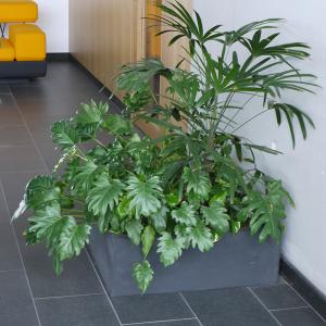 PLANTES-BACS-POTS